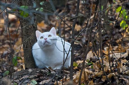 white cat ghost hunter furryfriday