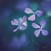 Pretty purple bokeh by borealnz