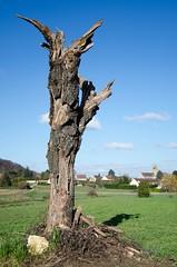 Cinqueux - Photo of Nointel