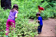 teagan, sequoia and tim pick huckleberries    MG 0107