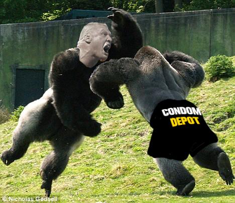 Poll: Toughest Man vs. Toughest Gorilla | MMAjunkie.com ...