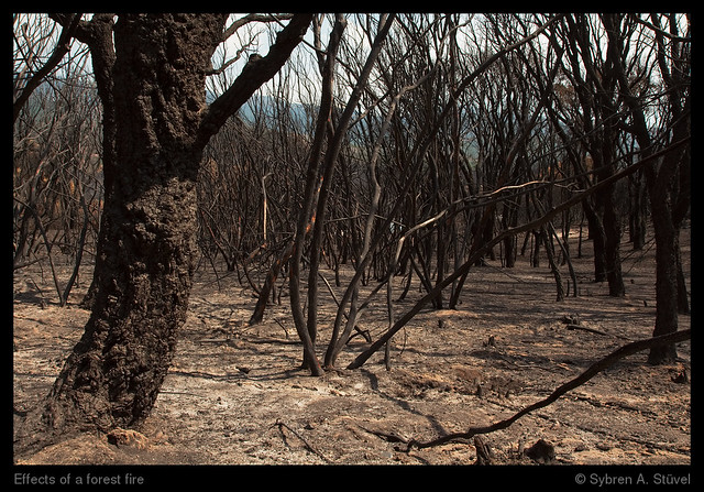 Effects of a forest fire | Flickr - Photo Sharing!
