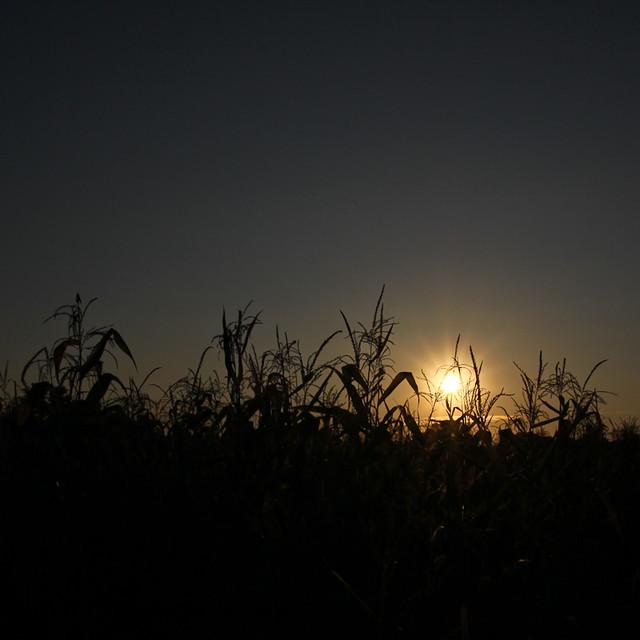 Sunset & Corn