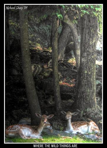 park canon quebec omega deer wherethewildthingsare hdr montebello photomatix g10