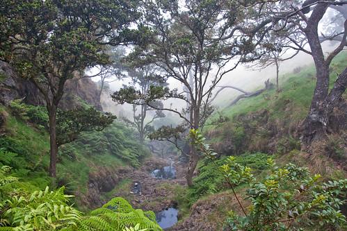 Kahikiniu forest