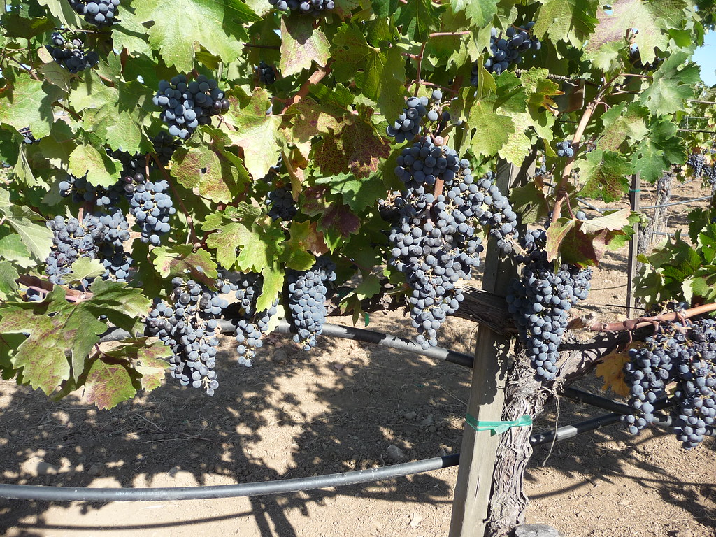 Hendry Winery tour