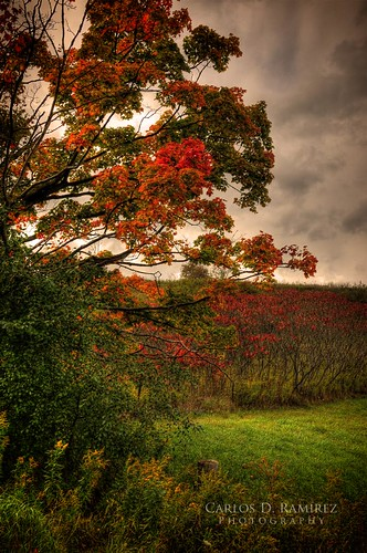 autumn red ontario canada tree green colors clouds nikon colours kingcity d300 nikkor1685mmf3556g carlosdramirez cdr35