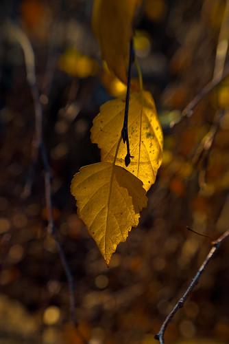 autumn fall wisconsin lensbaby vivid finepix fujifilm 2009 composer s3pro bej theperfectphotographer artofimages
