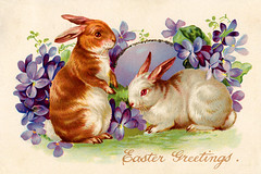 animal, hare, easter bunny, rabbit, domestic rabbit, pet, illustration, rabits and hares,