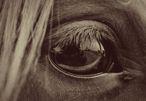 In the eye of a horse