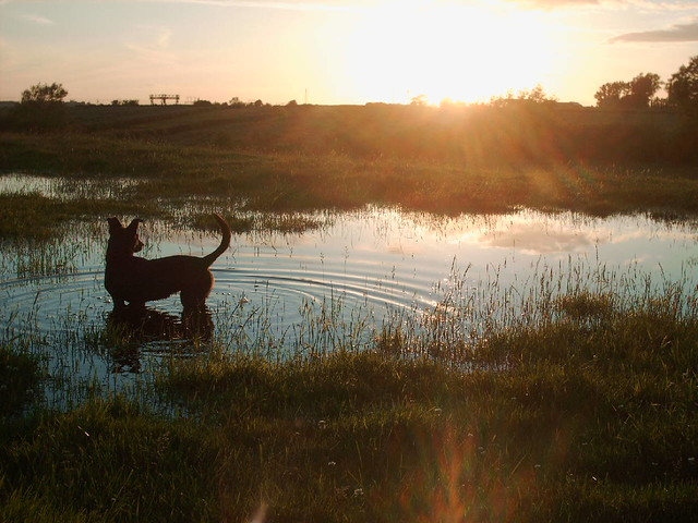 Sox & Sunset; Hanslope