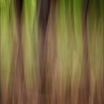 Tree streaks