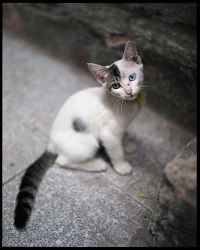 guangzhou china 120 cat mediumformat guangdong 6x7 中国 广州 c41 广东 pentax67 fujipro160s thecatwhoturnedonandoff cngzp67fp160s1009022 soundofchina