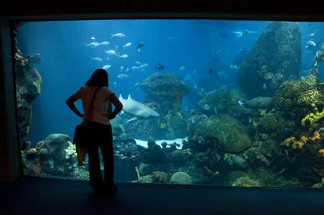 Image Result For The Tennessee Aquarium