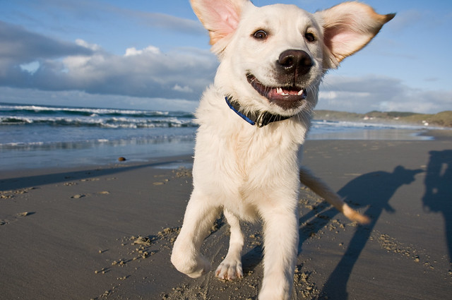 happy dog body posture smiling