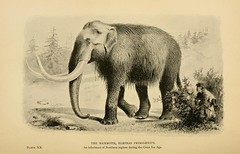 animal, elephant, elephants and mammoths, mammoth, african elephant, fauna, drawing, illustration,