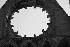 Elgin Cathedral #3