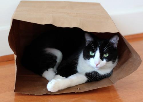 Oliver in Paper Bag