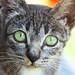Big Green Eyes by Ankol Tom
