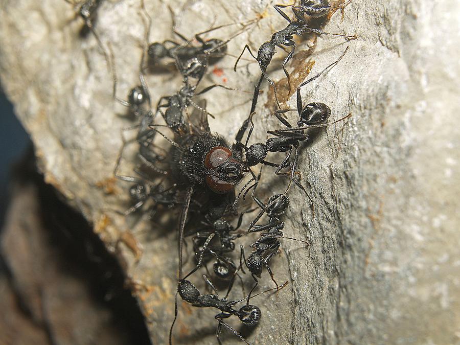 Plaga de moscardones en casa simple los concidos como - Como matar las moscas de mi casa ...