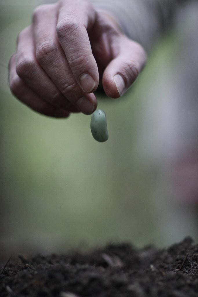 Jack & the beanstalk 2.0