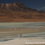 Danger, Flamingos - Salar Tour, Bolivia