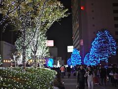 Illuminated Trees