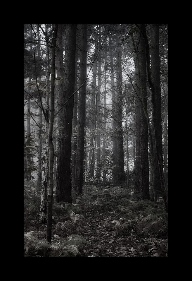 Photography: Dense by Nicholas M Vivian