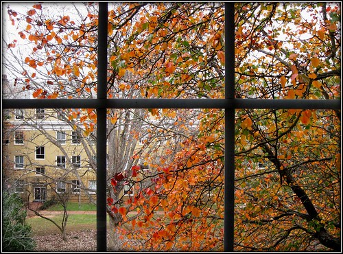 autumn window university