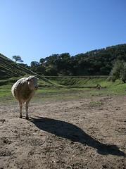 Livestock's long shadow (HA!)