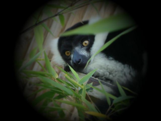Scared animal | Flickr - Photo Sharing!