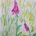 digitalis in mid-summer grass by greentea flute