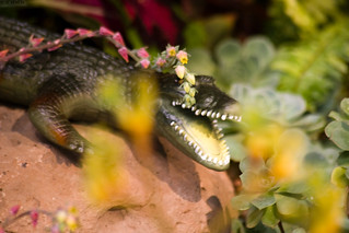 Crocodile In the Bushes