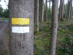 Tree Markings