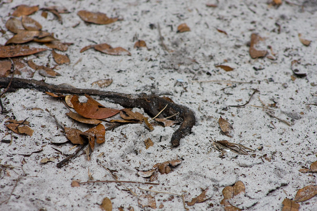 Snakes In Ponte Vedra Beach Florida