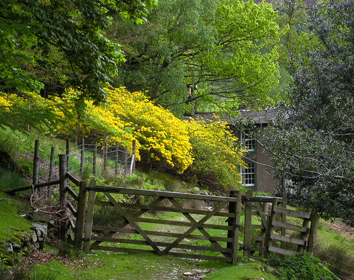 A Lakeland Cottage and Azaleas