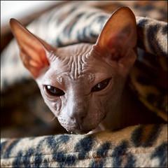 Creating the truly alien - alien cat!
