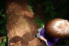 redwood forest   avenue of the giants day hike    MG…