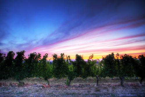 sunset sky cloud canon vintage eos vineyard wine wide vine wideangle winery grape 1022mm 40d
