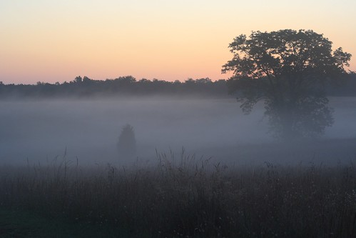 morning trees mist grass fog sunrise landscape dawn virginia early va manassas battlefield manassasva