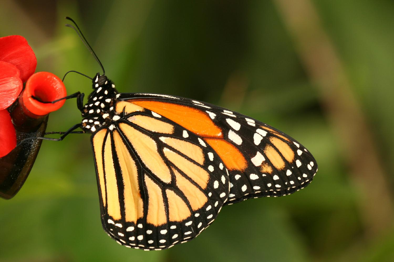A butterfly from the Garden in Grevenmacher