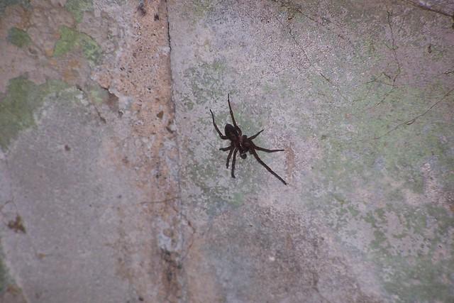 basement spider 1 flickr photo sharing