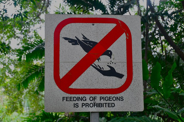 Feeding of pigeons is prohibited