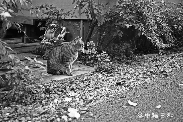 a cat in YANAKA, Tokyo