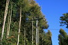 Telegraph poles growing !!!! by elizabeth after too long ...