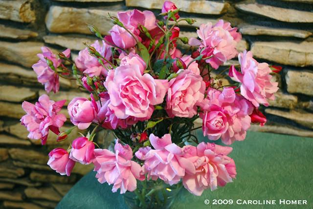 'Old Blush' roses