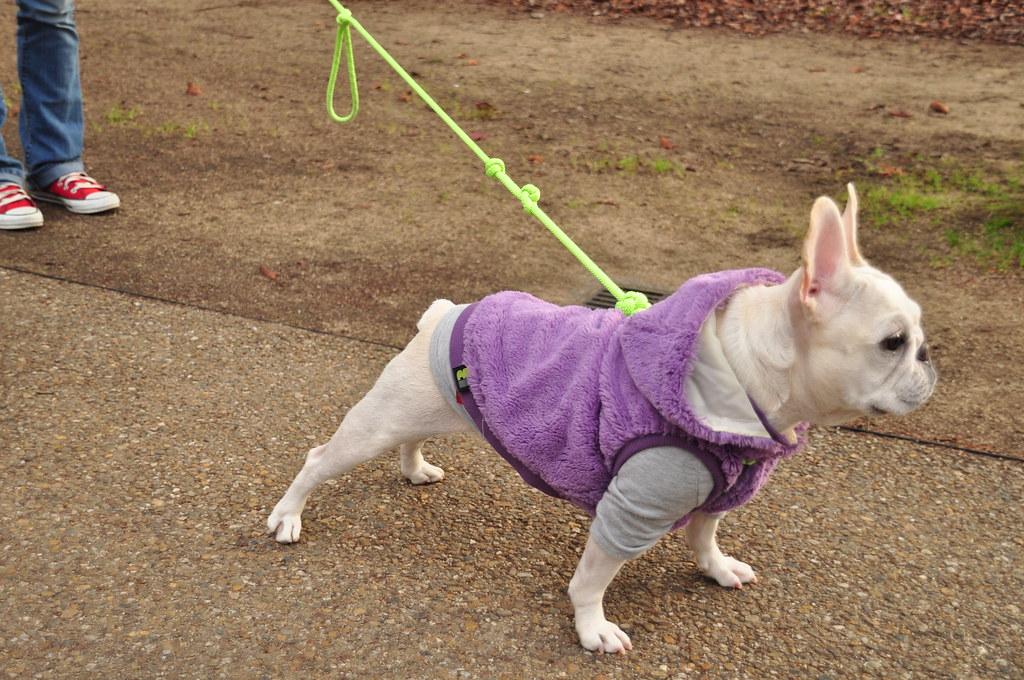 Doggie suit