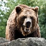 Woodland Park Zoo Seattle 082