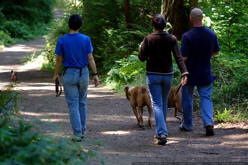 walking in the humboldt redwoods    MG 1107
