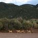 Small photo of Deer scamper away